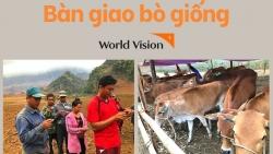 to chuc world vision vietnam trao 30 con bo giong cho nguoi dan dien bien